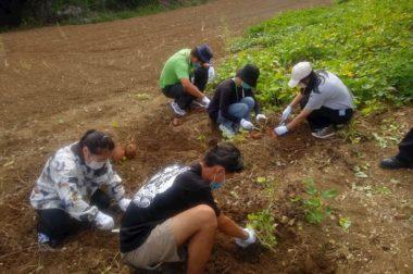 県の奨励品種の芋掘り体験(課外カリキュラム)