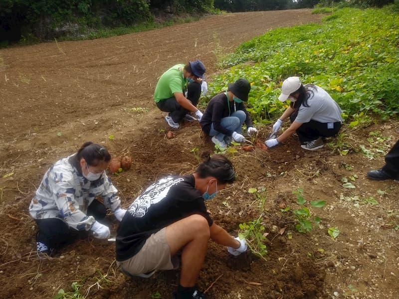 日本インターンシップ協会の支援する留学生が沖縄県の農家で県推奨品種の芋堀体験に参加